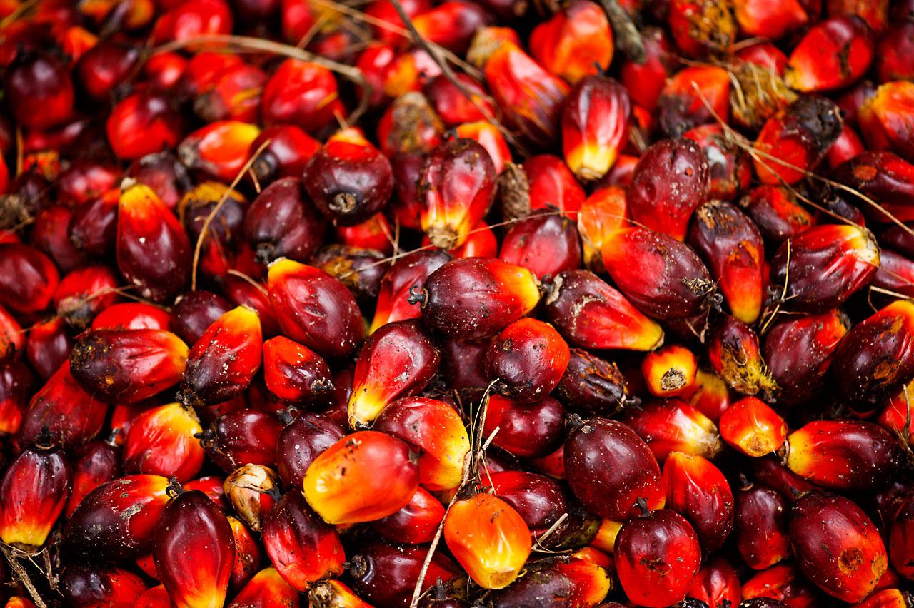 Así es el fruto de la palma de la que se extrae el aceite.