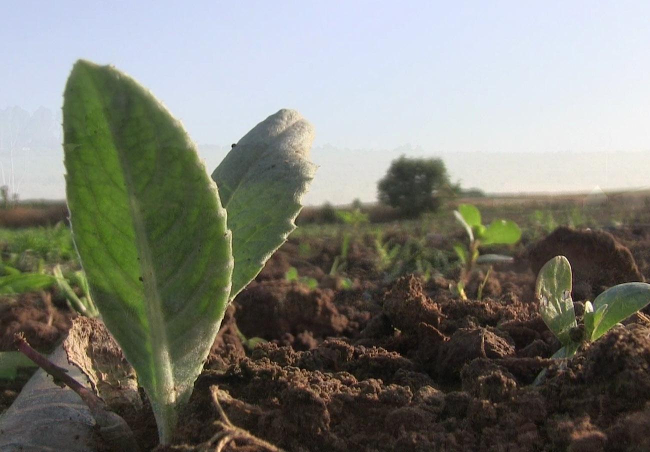 FACUA Andalucía lanza una campaña con ocho vídeos sobre #consumosostenible y responsable
