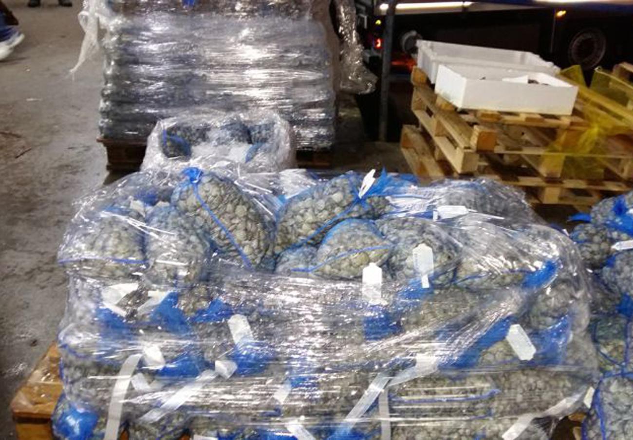 Intervenidas más de tres toneladas de pescado y marisco en Málaga por irregularidades en el etiquetado