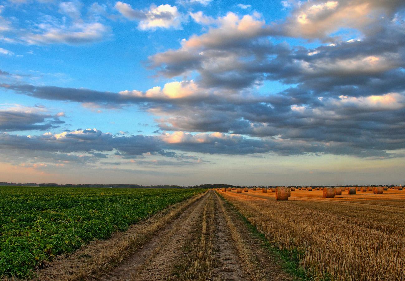 FACUA Castilla-La Mancha formará parte de los grupos de trabajo del II Foro de la PAC 2021