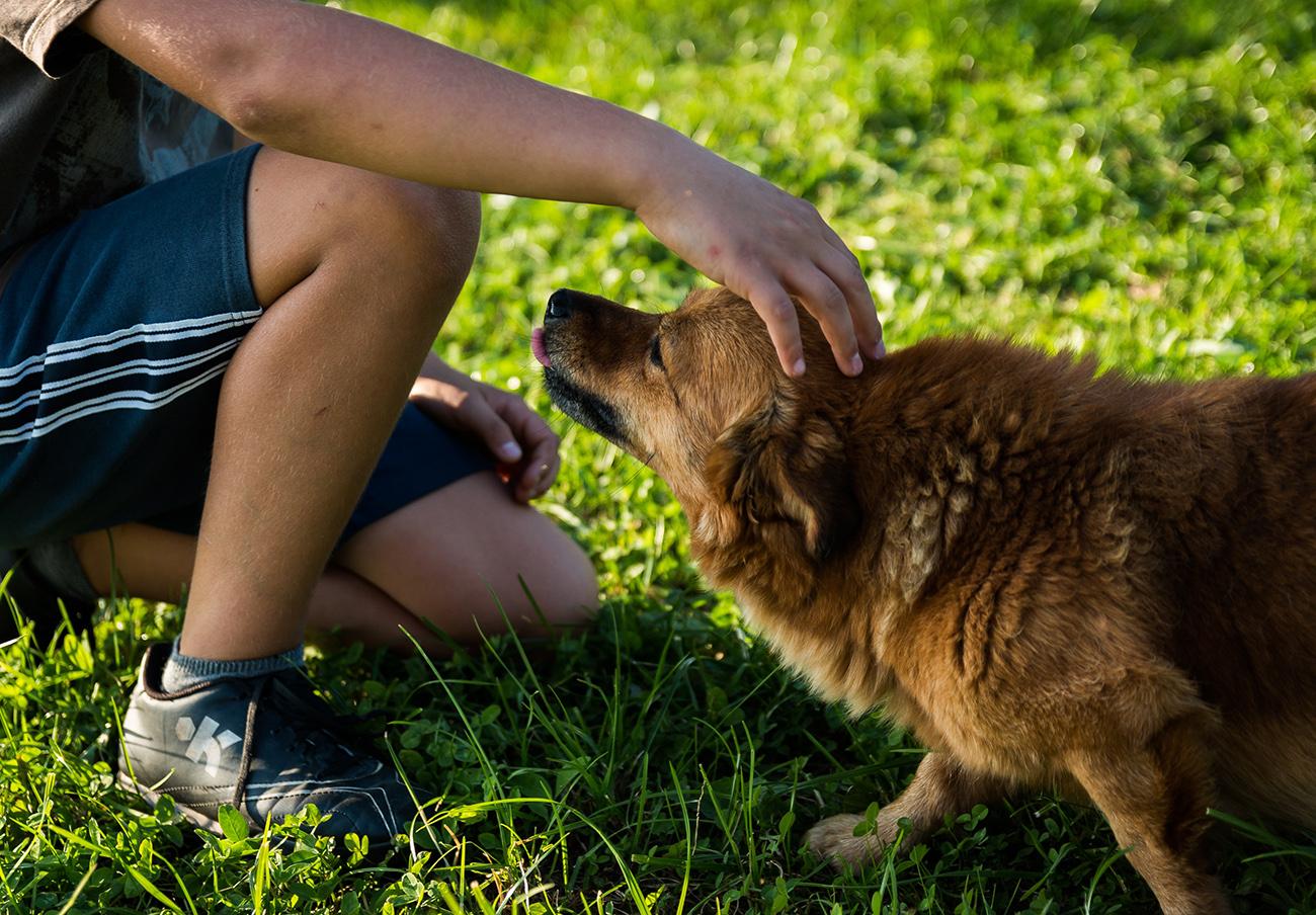 FACUA reclama  mejoras en los siete espacios de recreo de perros sin correa en Santander
