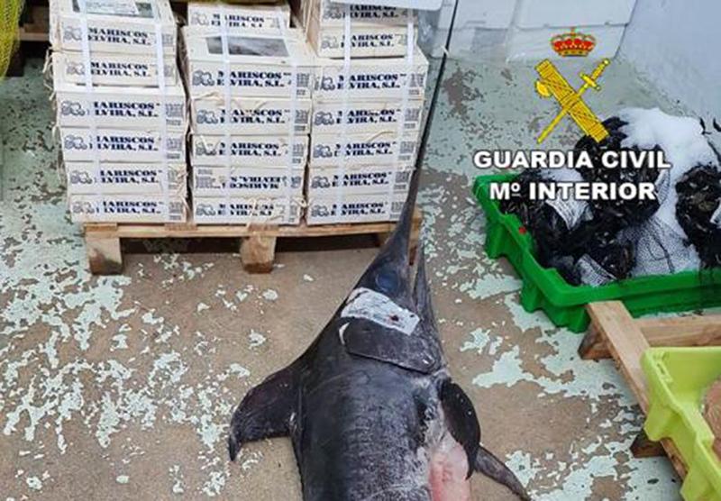 La Guardia Civil decomisa pescado caducado que se ofrecía como fresco en locales mayoristas de Alicante