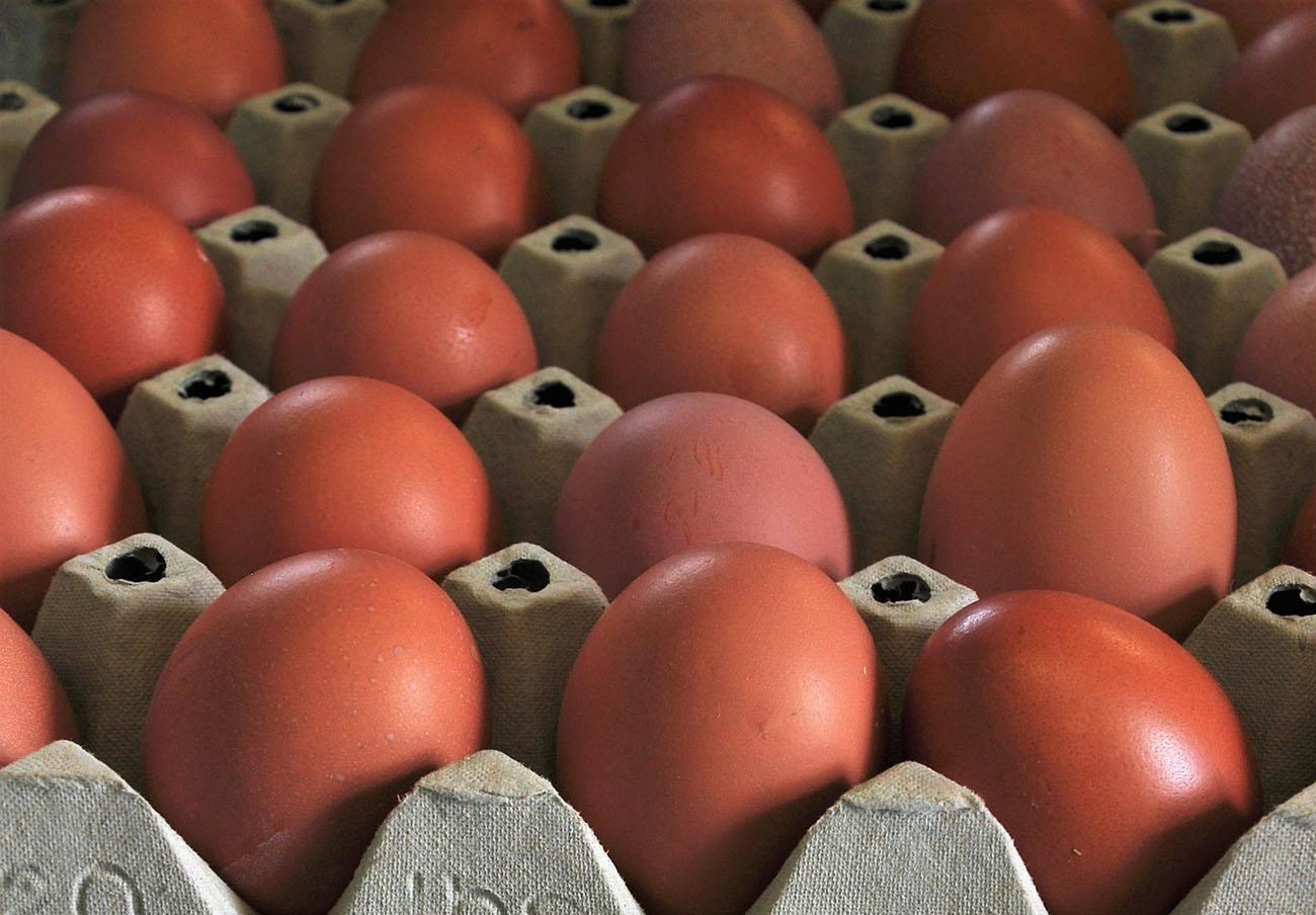FACUA pide que se haga público el listado de productos elaborados con huevos contaminados por fipronil