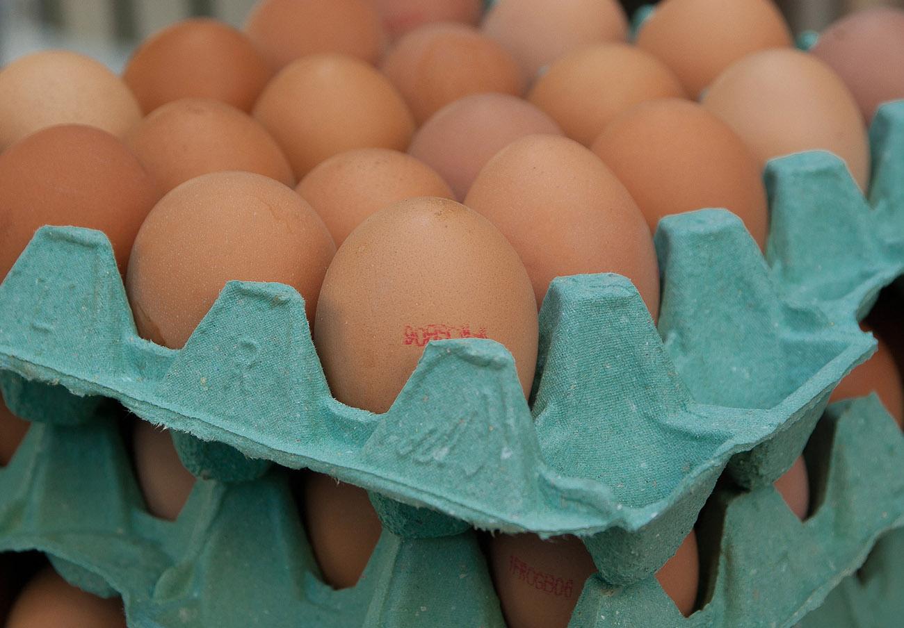 Retirada en Cataluña una partida de huevos con fipronil procedente de los Países Bajos