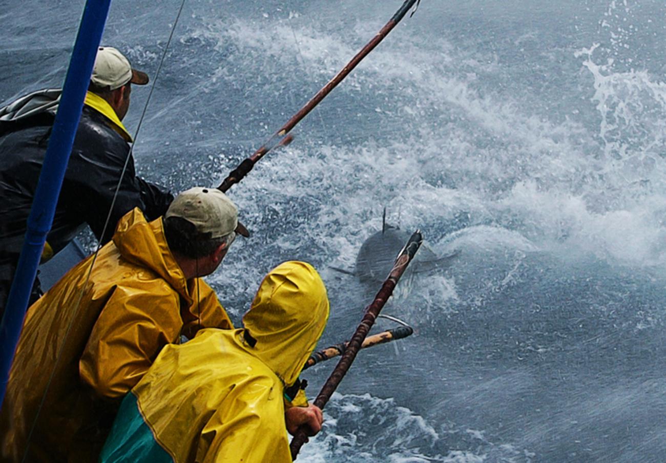 Investigan a siete personas por la intoxicación con histamina en el atún de la empresa Garciden
