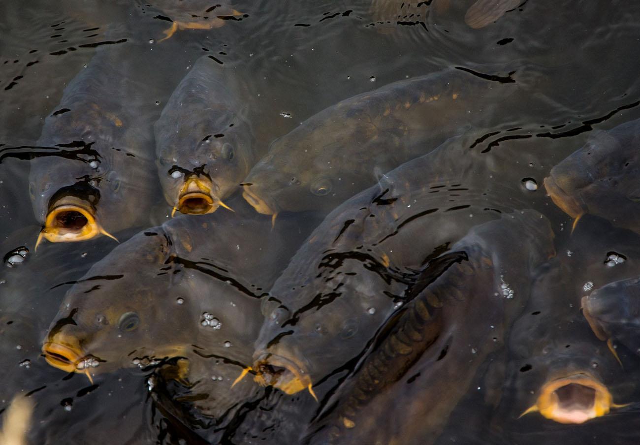 La CNMC investiga prácticas anticompetitivas en el mercado español de la acuicultura
