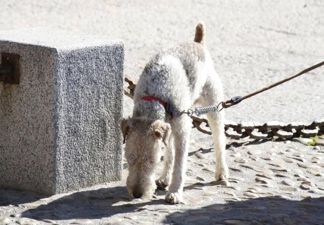 FACUA Sevilla insta al Consistorio de Dos Hermanas a cumplir la normativa sobre excrementos de perros