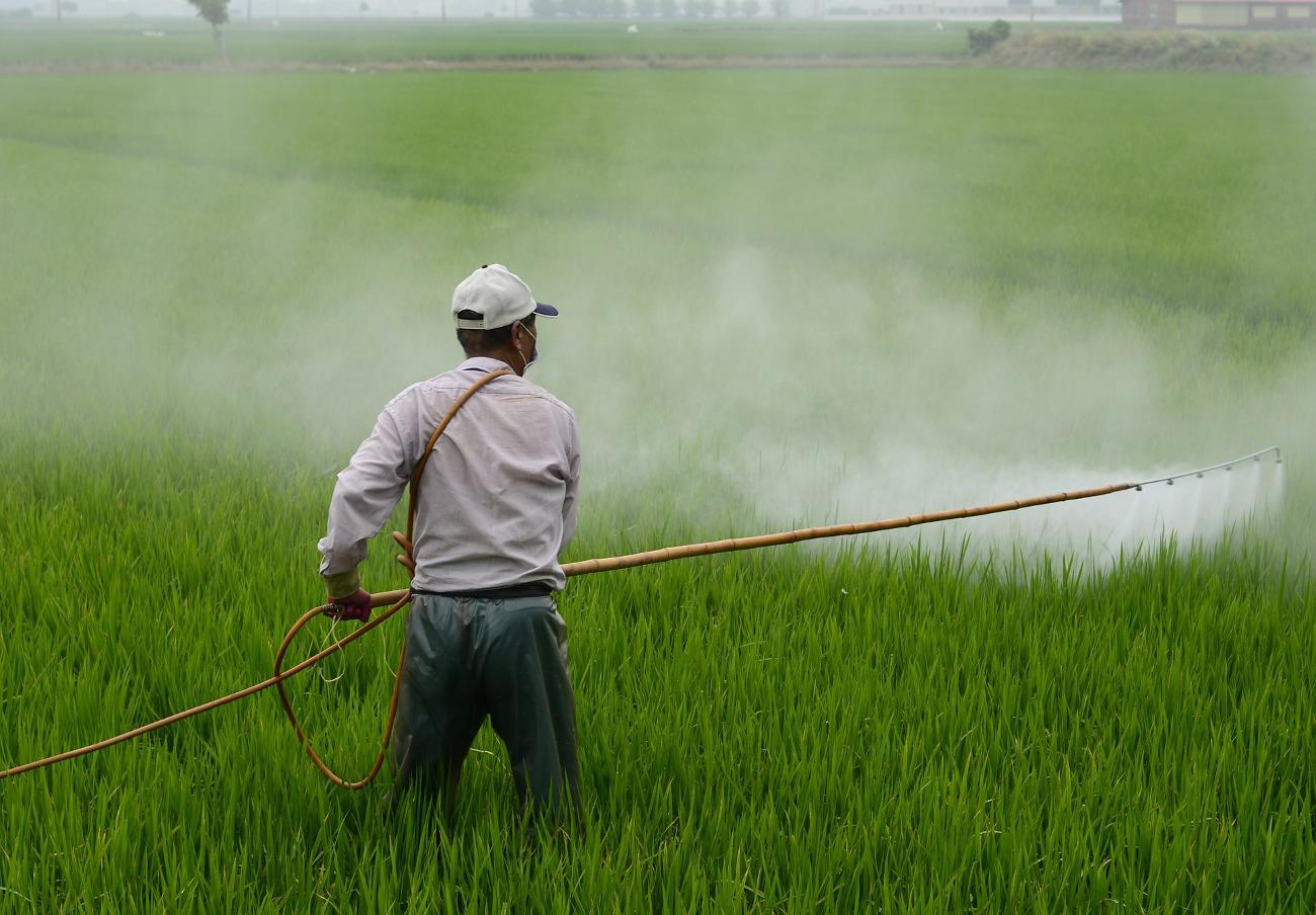 Condenada Monsanto a pagar 289 millones de dólares por un cáncer terminal provocado por el glifosato