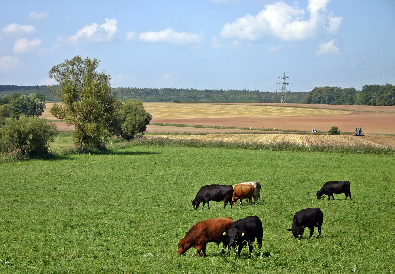 El TUE dice que la carne de animales sacrificados sin aturdir no puede llevar el sello ecológico de la UE