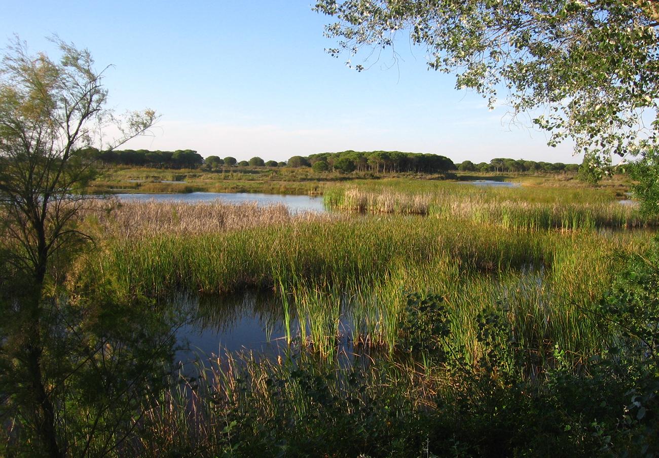 El Parlamento Europeo insta a España a cerrar los pozos ilegales de Doñana