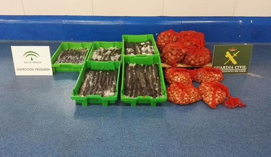 Intervenidos 234 kilos de pescado y moluscos no aptos para el consumo en Guarromán (Jaén)