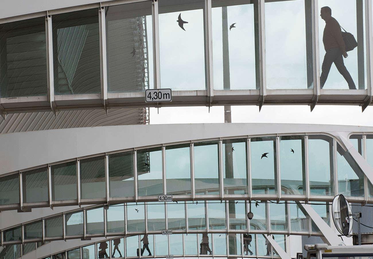 FACUA Euskadi pide explicaciones a AENA por la presencia de aves en las pistas del aeropuerto de Bilbao
