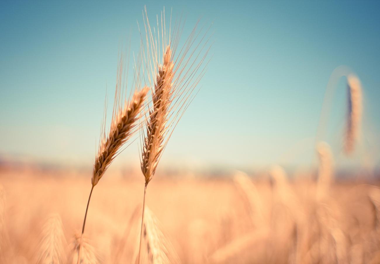 FACUA alerta de la presencia de mostaza no declarada en gluten de trigo marca Eco-Salim