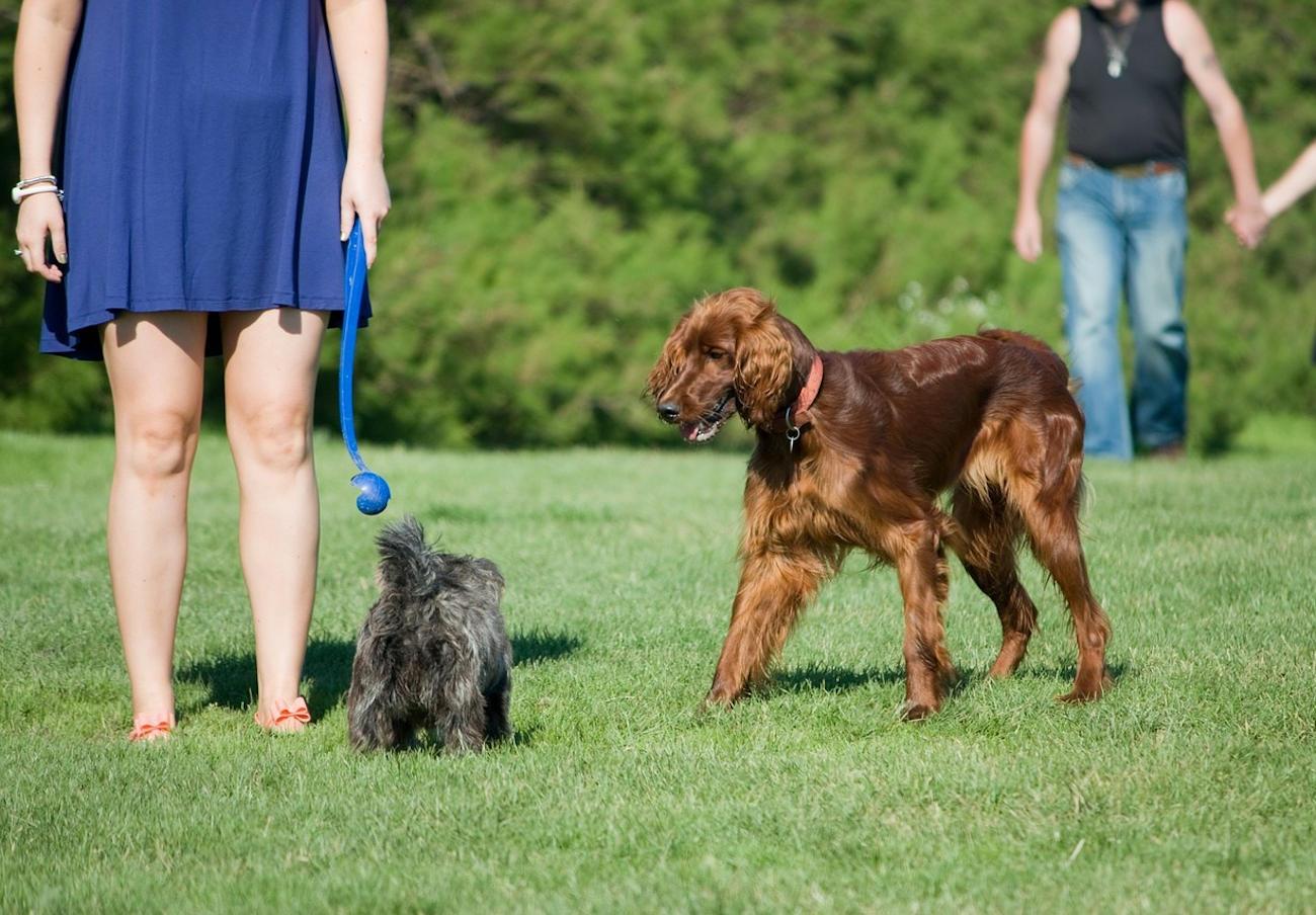 El Ayuntamiento de Vic multa con 620 euros a quienes no recogen las heces de su perro