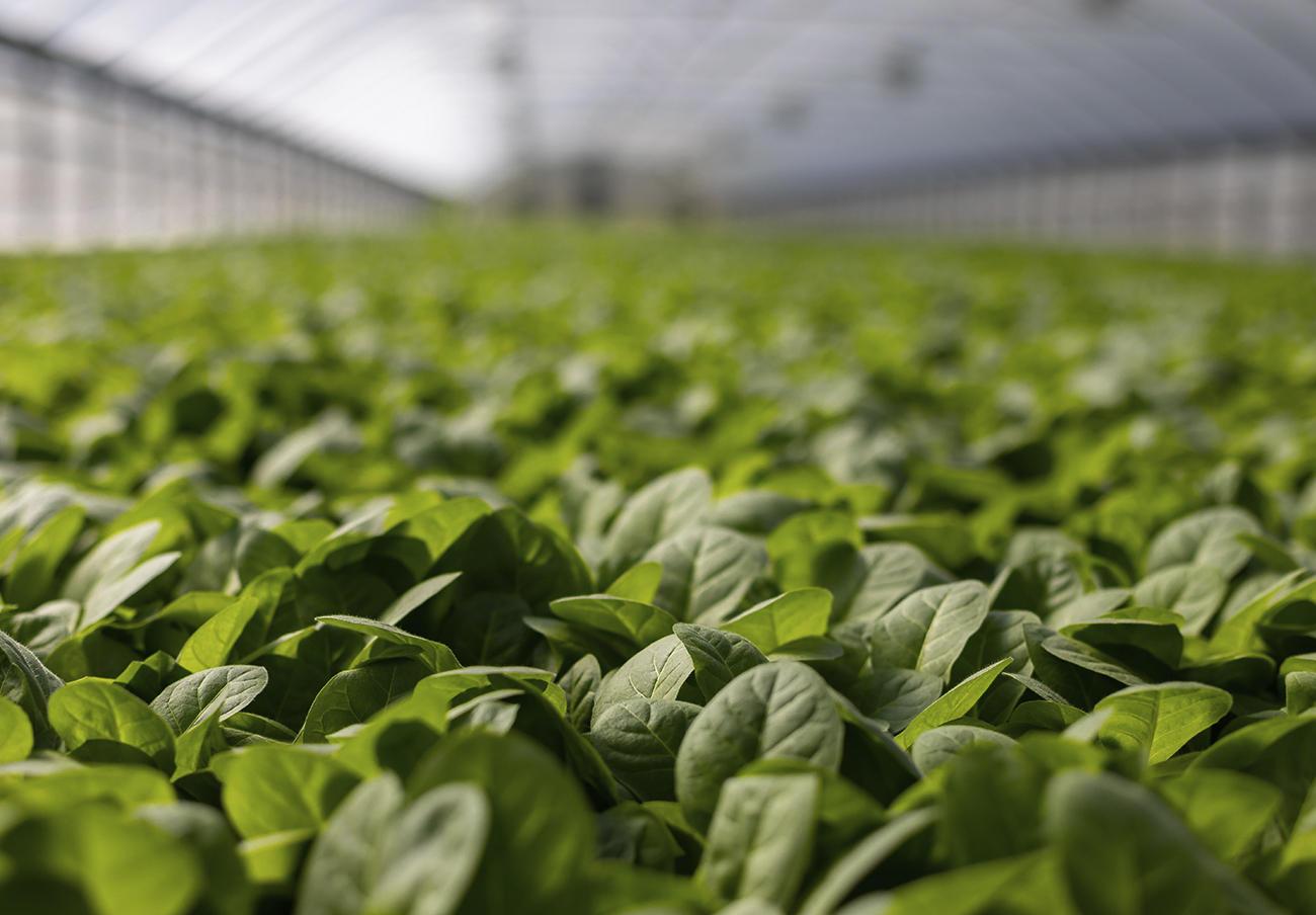 FACUA insiste en reclamar al Gobierno que se informe del precio de origen en los productos del campo