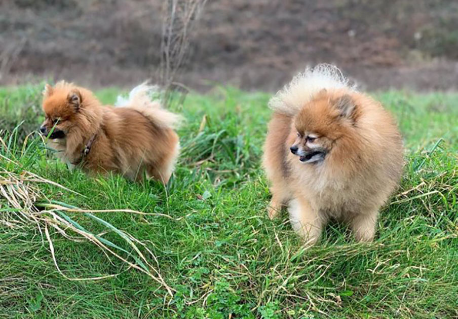 Competencia investiga a la Real Sociedad Canina Española por presuntas prácticas anticompetitivas