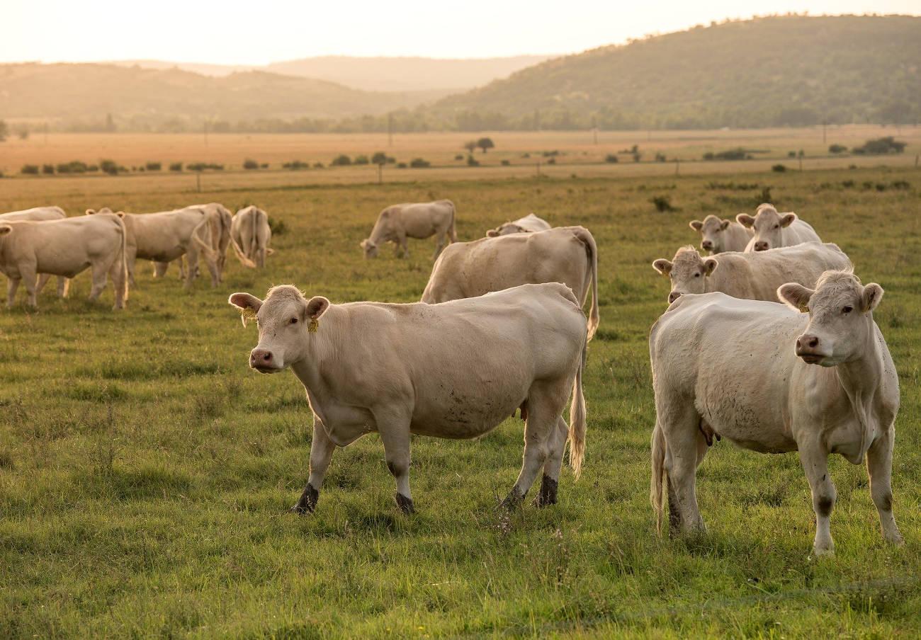 FACUA recuerda al Gobierno que su Plan España 2050 recoge la reducción del consumo de carne