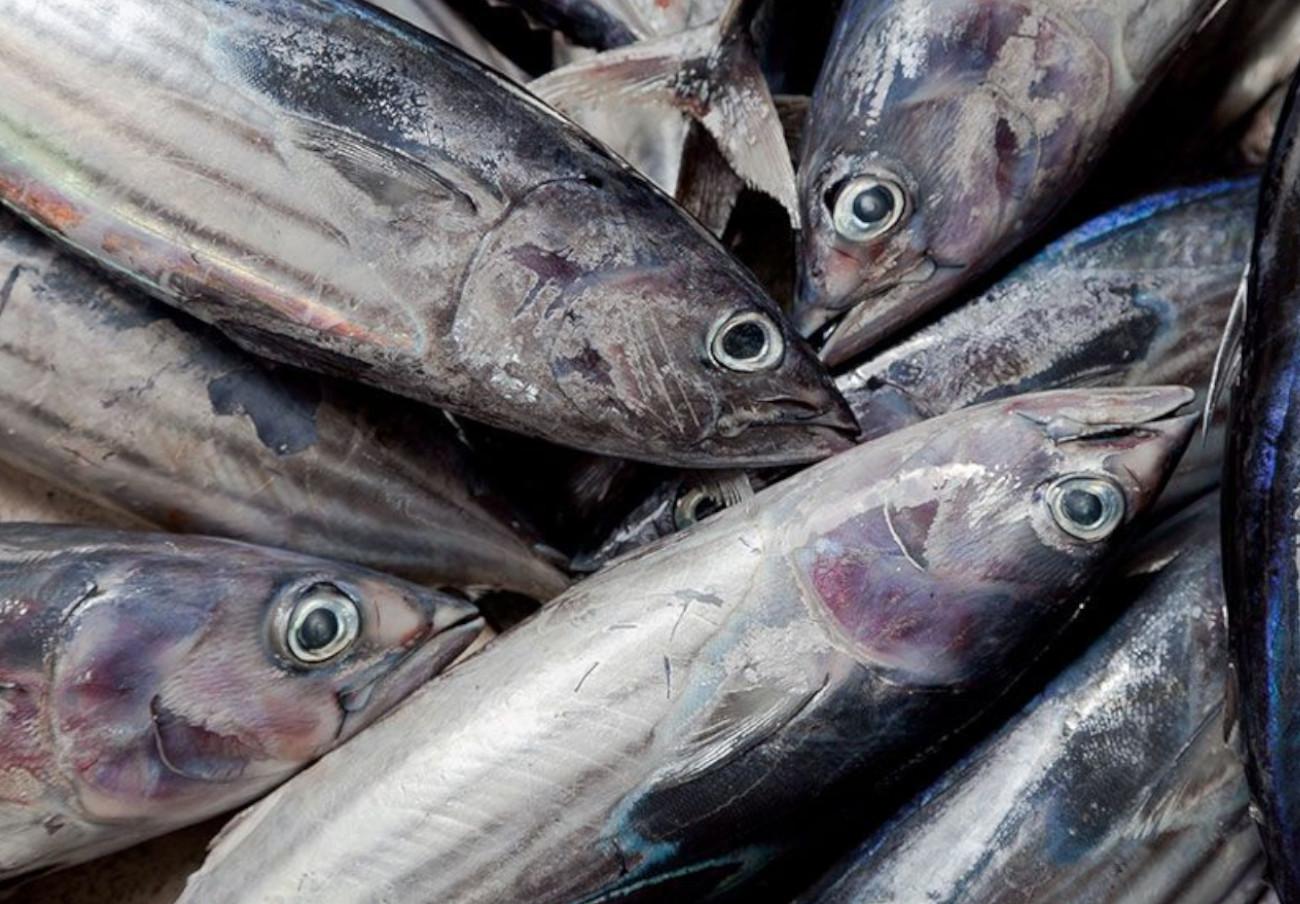 Una investigación de la Universidad de Oviedo destapa un fraude en el etiquetado de pescado congelado