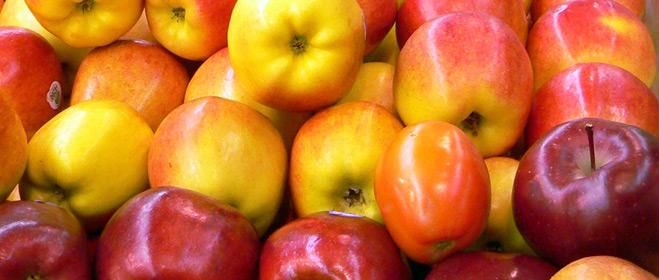 La CE propone destinar 90 millones anuales a la distribución de fruta en colegios
